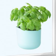 EDEN SUCTION PLANTER BLUE